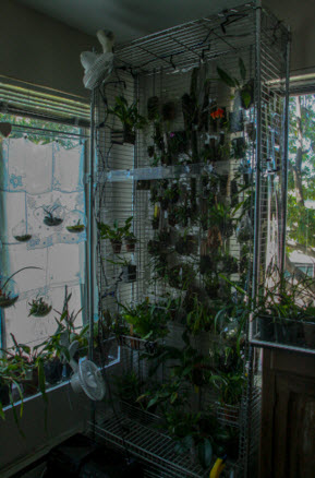 orchid wall new size