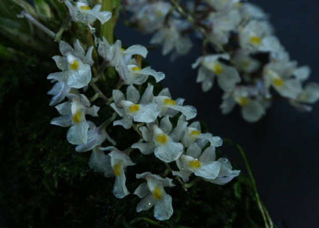 white flower2