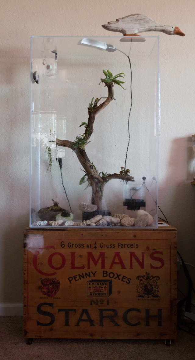 2017-July-small vivarium full view-6778